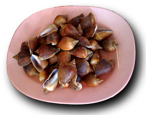 dog conch หอยชักตีน